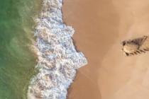 这些是2021年无人机摄影奖的惊人获奖者